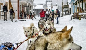 Sled dog teams travel wilderness trails between Quesnel, Wells